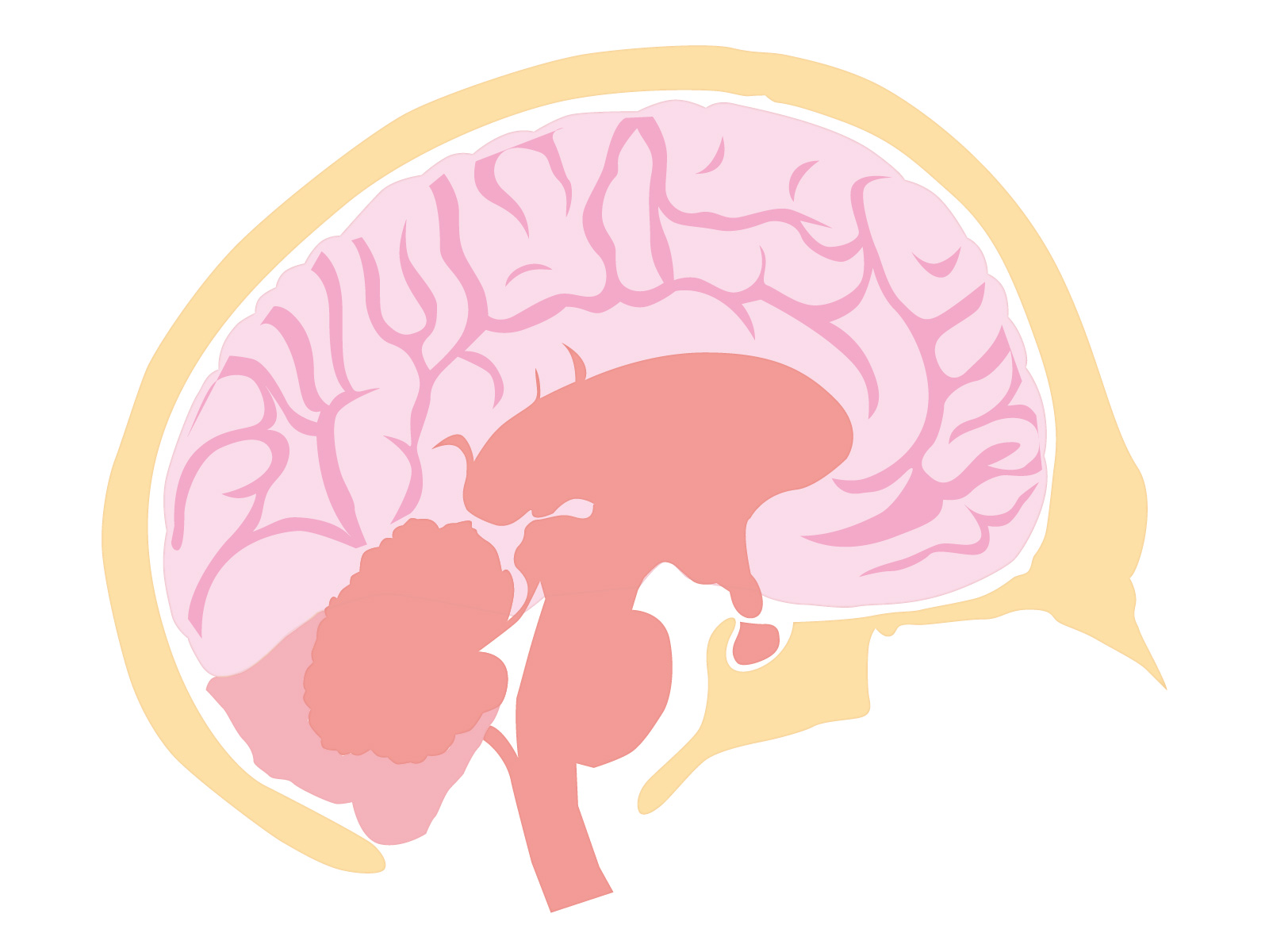 脳血管性認知症の症状と特徴について